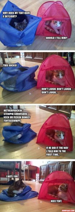too funny: Funny Animals, Kitty Cat, Giggle, Funny Pictures, Funny Cats, Nice Tent, Cat Tents, Funnies