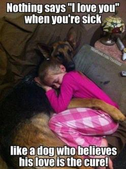true story #gsd #shepherd #pets: Sick Day, Germanshepherd, Animals, Dogs, Pets, So True, German Shepherds, German Shepard, Friend