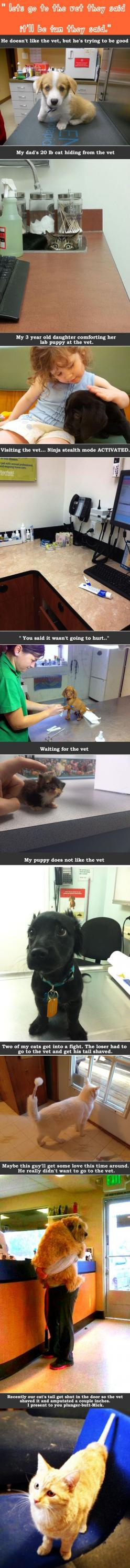 visits to the vet: Funny Pets, Funny Animals, Dogs And Cats, Animal Funnies, Baby Kittens, Cute Animals, Vet Tech, So Funny