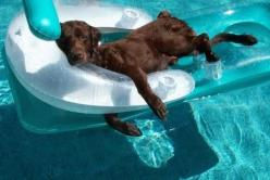 We get it. It's summertime and that means it's difficult to stay on task when it comes to LSAT prep. Click this pin for our tips for staying focused on your LSAT prep all summer long!: Animals, Dogs, Life, Pool, Pets, Funny, Summer, Puppy