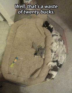 Well thats a waste of twenty bucks - http://www.jokideo.com/: Cats, Funny Animals, Dogs, Stuff, Pet, Funnies, Puppy, Twenty Buck