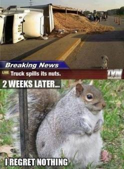 When Life Gives You Nuts // funny pictures - funny photos - funny images - funny pics - funny quotes - #lol #humor #funnypictures: