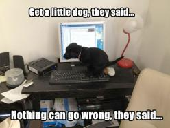 When things go awfully wrong…: Computer, Animals, Funny Pictures, Funny Stuff, Funnies, Puppy, Humor, Funny Animal, Little Dogs