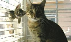 Why are you so sad, Window Kitten? Hopefully because you keep ruining your mom's photos and you are guilty about it! Ugh.: Cats, Animals, Pets, Funny, Kittens, Baby, Photo, Kitty