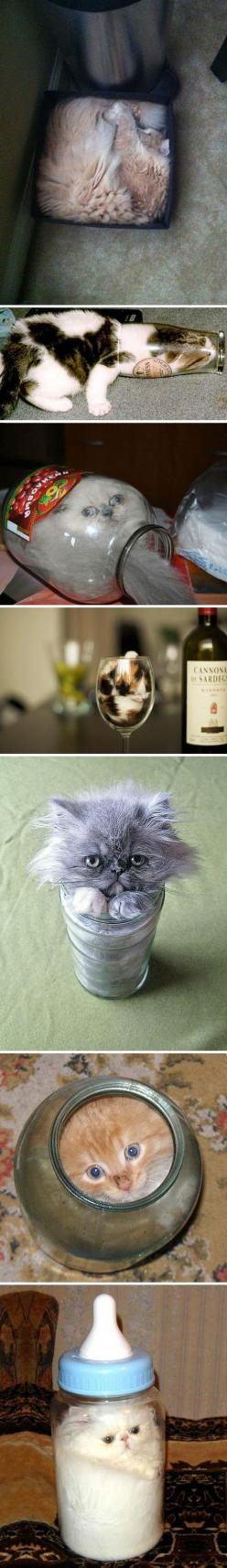 Why cats are liquids // funny pictures - funny photos - funny images - funny pics - funny quotes - #lol #humor #funnypictures: Funny Pictures, Funny Cats, Adorable Liquid, Funny Photos, Funny Animal, Prove Cats, Liquid Cats, Stuck Cats, Cat Lady