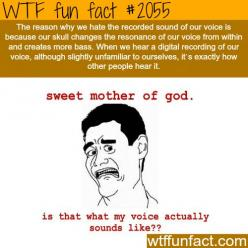 Why do we hate our own voice? - WTF fun facts: Wtf Facts, Hate, Life, Wtf Fun Facts, Weird Facts, Funny Stuff, Things, Facts Ideas Stuff