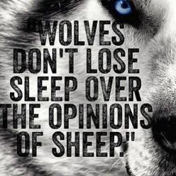 "WOLVES DON'T LOSE SLEEP OVER THE OPINIONS OF SHEEP."": Sayings, Inspiration, Quotes, Lose Sleep, Wolves Don T, Don T Lose, True, Sheep, Opinion"