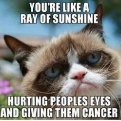 You're like a ray of sunshine... hurting people's eyss and giving them cancer. #GrumpyCat: Cats, Hate, Grumpycat, Funny Stuff, Humor, Grumpy Cat Meme, Animal, Cat Memes
