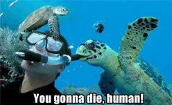 You came to the wrong ocean...: Animals, Seaturtle, Funny Stuff, Humor, Funnies, Funny Animal, Sea Turtles, Photo
