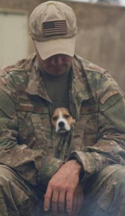 You cannot tell me that isn't to cutest thing ever. That is so adorable.!: Animals, Hero, Soldiers, Dogs, Beagle, Man, Friend, Military
