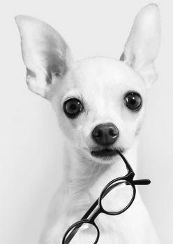 You dont need other people to validate you, youre already valuable.~ Love Your Dog? Visit our website NOW!: Animals, Chihuahuas, Dogs, Glasses, Pets, Wallpaper, Photo, Friend