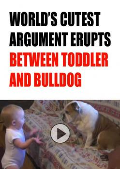 #Youtube #funnyvideos #humor  brought to you by http://williamotoole.com/RobHollis1I can't even stand it. This is too cute!!! http://theilovedogssite.com/cutest-argument-ever-erupts-between-toddler-and-english-bulldog/: