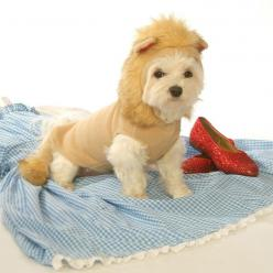 """Lion"" Dog Costume: Faux Fur, Dogcostumes, Cat, Dogs, Pet, Lion Costume, Dog Costumes, Costumes Adogfashioncom"