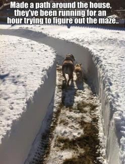"""Made a path around the house, they've been running for an hour trying to figure out the maze."" ~ Dog Shaming shame: Funny Animals, Dogs, Funny Pictures, Funny Stuff, Humor, Funnies"