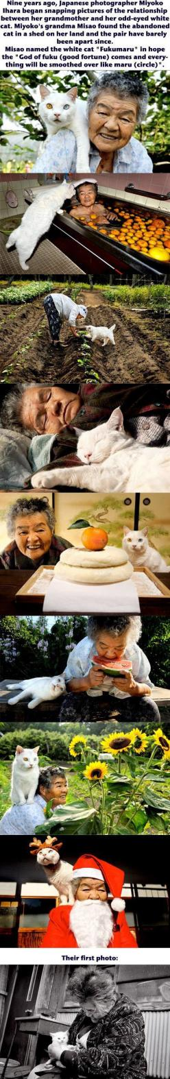A photographer captures the beautiful relationship between her grandmother and her cat. Beautiful!: Awww Best Friends, Cat Relationships, Geeky Photographer, Pet, White Cats, Grandmother, Cat Lady, Animal, Cat Cuteness