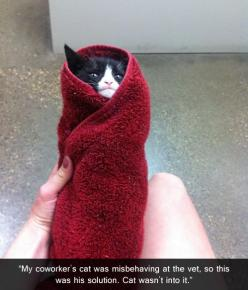 AAAAA!! that's exactly what I would do with my tuxedo kitty tijijijiji he would start biting and kicking us for no reason and so I got him wrapped him up and and it like sedated him... Four years he would come into the house eat, walk around, be pette