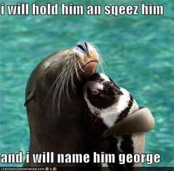 Ahahaha, @Becky Houtchens only your husband! (:: Seals, Animals, Friends, Hug, Sea Lion, Pet, Penguins, Funny Animal, Things