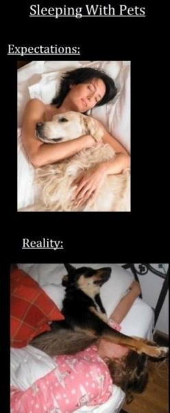 And mine is only 15 lbs- but insists on sleeping sides ways... That's why he sleeps on the floor now!: Animals, Dogs, Sotrue, Truth, Pets, My Life, Funny, So True