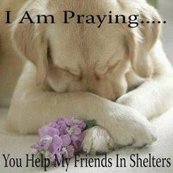 .animals in shelters: Prayer, Animals, Friends, Sweet, Dogs, Pets, Puppy