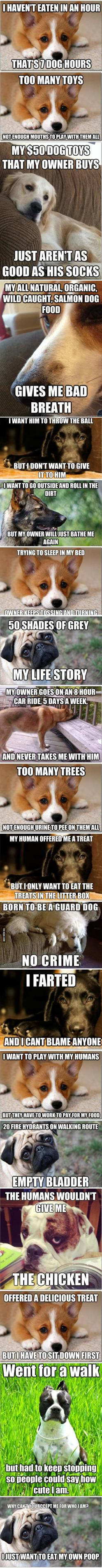 Applies pretty much perfectly to our doggies :): Puppy Memes, Dog Problems, Doggie Problems, Hard Life, Puppy Problems, Animal
