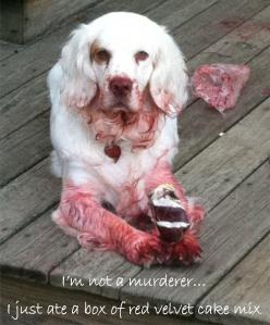 At first I thought he was hurt but he just ate a box of red velvet cake lo l: Animals, Dog Shaming, Dogs, Pet, Funny, Funnies, Cake Mix, Red Velvet Cakes
