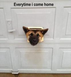 Attack Of The Funny Animals – 50 Pics: Funny Animals, Dogs, Stuff, Funny Pictures, Humor, Funnies, Homes