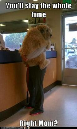 aww! lol...this for my Lindsey  @Lindsey Grande Grande Grande Grande Compton: Animals, Dogs, Pets, Big Baby, Funny, Puppy, Know