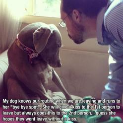 Awwww....: A Kiss, Animals, Weimaraner, Dogs, Funny Pictures, Pet, Puppy, Bye Bye, Bye Spot