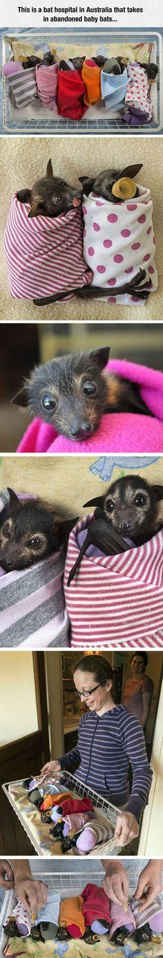 Baby Bats Can Be Cute Too