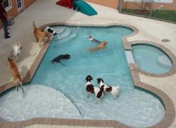 """Backyard dog pool. """" I've heard from a vet that swimming is excellent for your dog for same reasons for us. Good,cool exercise and easy on the joints: Doggie, Animals, Idea, Dogs, Dream House, Pets, Dog Pools, Dog Stuff"""