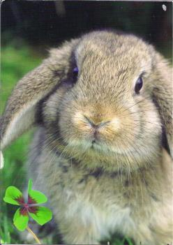 Beautiful Bunny Rabbit: Pets Animals, Beautiful Animals, Animals One, Pet Rabbits, Bunnies, Animals Rabbits, Rabbits Pets