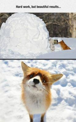 Beautiful Results: Animals ๑ ฺ, 3, Animals Rule, Pure Hearted Foxes, Pet, Beautifull Creatures, Beautiful Stuffs