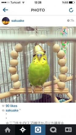 Budgie wearing a bell as a hat. ^_^: Parrot Budgies, Bestie Budgies, Cute Parakeet, Birdie, Budgies Bird, Budgies Parakeet, Bird Budgie, Birds
