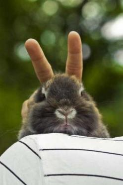 Bunny Ears: Animals, Bunbun, Funny Animal, Rabbit Ears, Bunnies, Smile