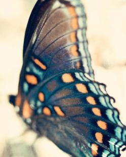 Butterfly Photo - 8x10 Fine Art Photography, nature photo, wings, turquoise, blue, black, coral, orange, gray, aqua, teal, wall art: Butterfly Photograph, Butterflies, Fine Art Photography, Butterfly Wings, Butterfly Photoraphy, Art Design Photography