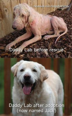 Can you believe this is the same dog!? never ceases to amaze me what a great home, good vet, quality for and TONS of love can do!  WOO HOO JACK & YOUR AMAZINGFAMILY!!: Animal Rescue, Abused Animal, Animal Rights, Animal Cruelty, Pet, Poor Dog, Animal