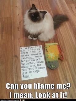 cat shaming: Cats, Animals, Funny, Cat Shaming, Funnies, Kitty, Pet Shaming