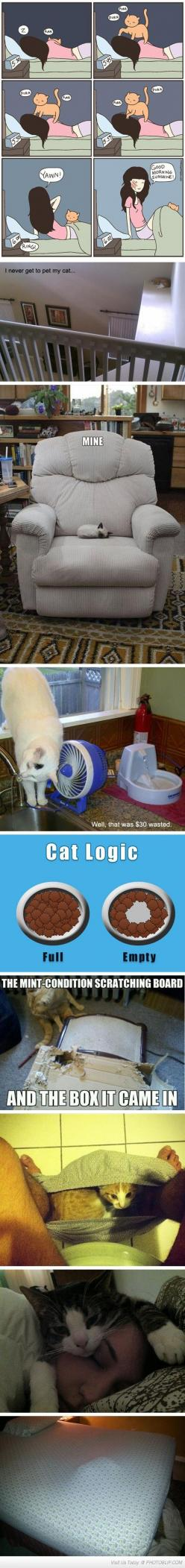 Cats...: Cats Cats, Kitty Cats, Giggle, Funny Cat, Cat Logic, Crazy Cat, Funny Animal, Cat Lady