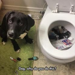 cause that's where it goes? LOL this dog looks exactly like mine: Funny Animals, Dogs, Toilet, Animal Funnies, Funny Pictures, Funny Stuff