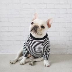 Classic Striped Tee | Pipolli: Tees, Arqdog Project, Striped Tee, French Bulldogs, Toocute Stripedtee, Allows Dogs, Stripedtee Frenchbulldog, Classic Striped, Stripes