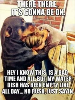 .   ...........click here to find out more     http://googydog.com: Animals, Dogs, Quote, Pet, Funny Stuff, Funnies, Friend