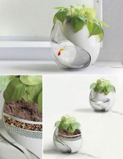 creative small fish tank | Top Creative Works » Nontraditional fish tank: Idea, Fish Tanks, You, Fishtank, Fishbowl, One Pot