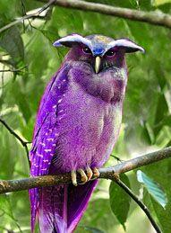 Crested Owl...pretty in purple :): Animals, Nature, Purple Owl, Crested Owl, Beautiful Birds, Owls