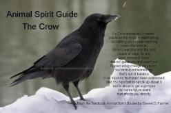 Crow passes through time, from past to future, as he will, and brings messages. Some traditions say it is from the Deity, some say from loved ones who have passed on. 386771_516549158377726_1544718453_n.jpg 480×319 pixels: The Crow, Animal Spirit Guides,