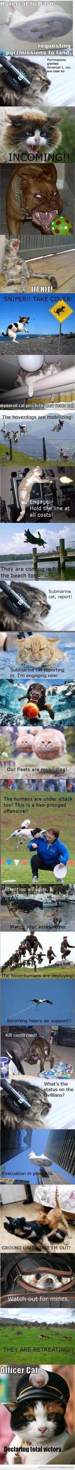 CRYING!: Funny Animals, Funny Stuff, Funnies, Cats And Dogs, So Funny, Hovercat