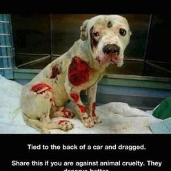 Crying! Please repin if you are against it!: Car, Animals, Animal Rights, Dogs, Animal Cruelty, Pitbull, Animal Abuse, People, Poor Baby