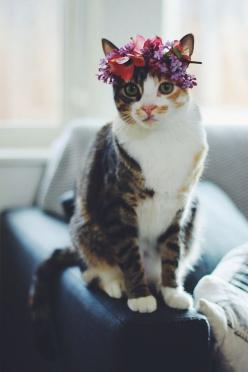 cuddling with my cats - a house feels like a home when there's a cat lying somewhere on a couch - stretching out in a sunspot on the carpet - cuddled up next to my feet at night ...: Kitty Cats, Kitten, Animals, Flower Crowns, Flowercrown, Cat Lady, K