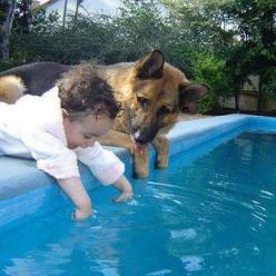 Cute!  How adorable!!! look at the dog, I think he is watching verrrry carefully to make sure this baby doesn't try and get into the water!! thank God the dog is there....: Animals, Friends, Dogs, Pets, German Shepherds, Baby, Things, German Shepard,