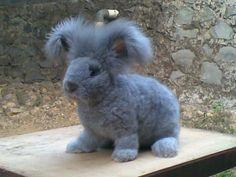 Cuter than cute! Shaved Blue Angora Rabbit ;) and he's still fluffy!