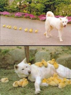 Cutest. Thing. Ever.: Animals, Dogs, Pet, Funny, Adorable, Friend